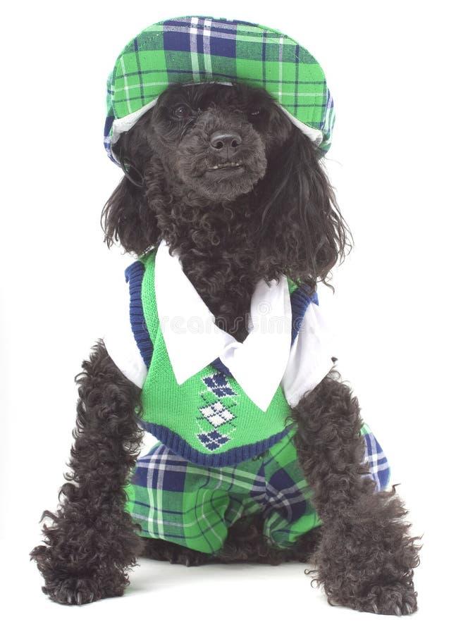 Cão do golfe foto de stock royalty free