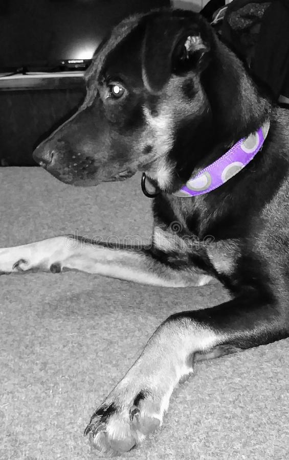 Cão do melhor amigo fotografia de stock