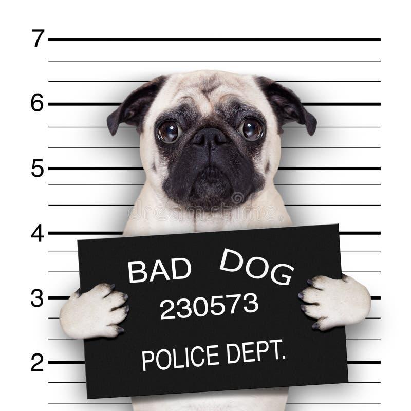 Cão do Mugshot
