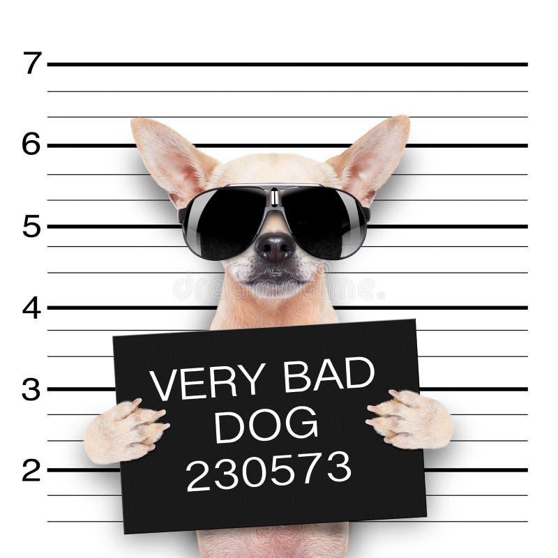Cão do Mugshot imagem de stock royalty free