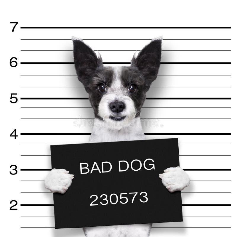 Cão do Mugshot foto de stock royalty free