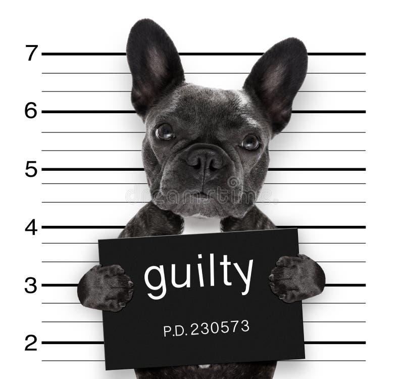 Cão do Mugshot na delegacia fotos de stock royalty free