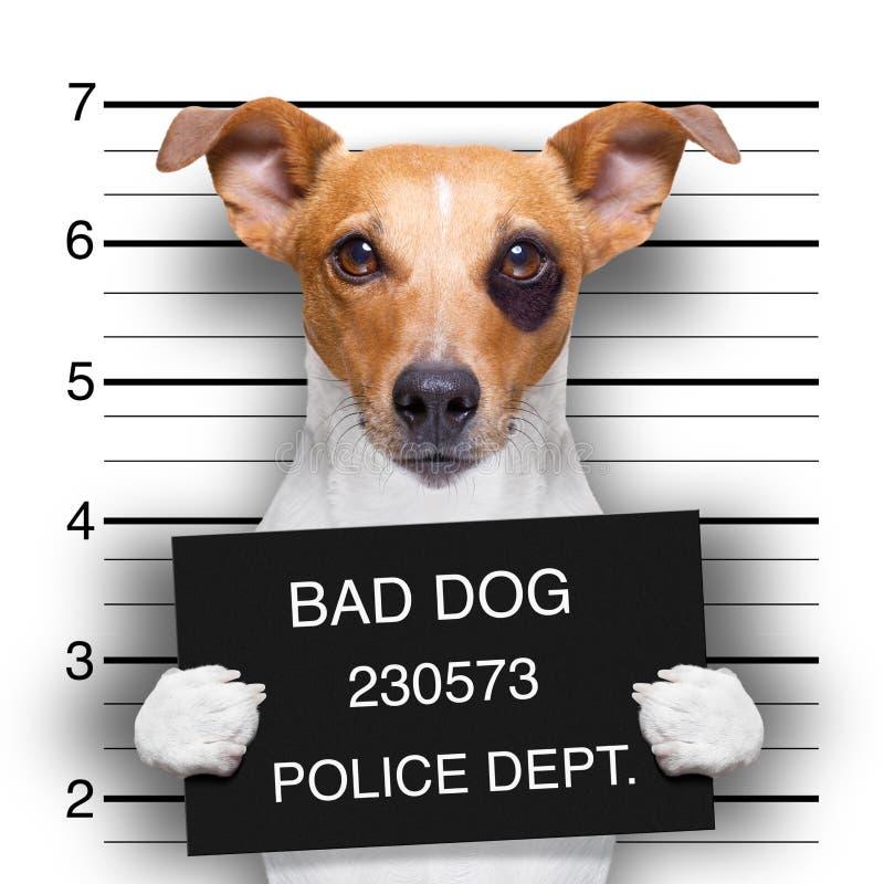 Cão do Mugshot na delegacia fotografia de stock royalty free