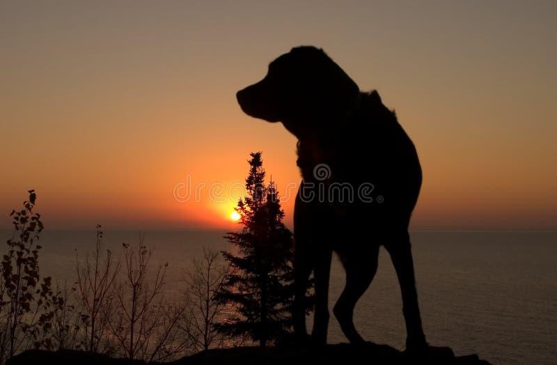 Cão do nascer do sol foto de stock