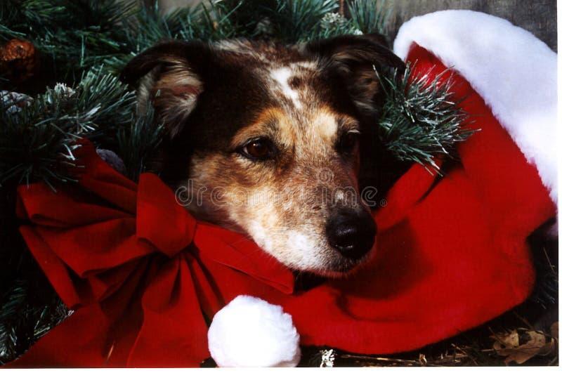 Cão do Natal fotografia de stock