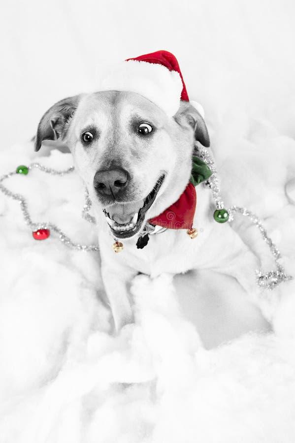 Cão do Natal fotografia de stock royalty free