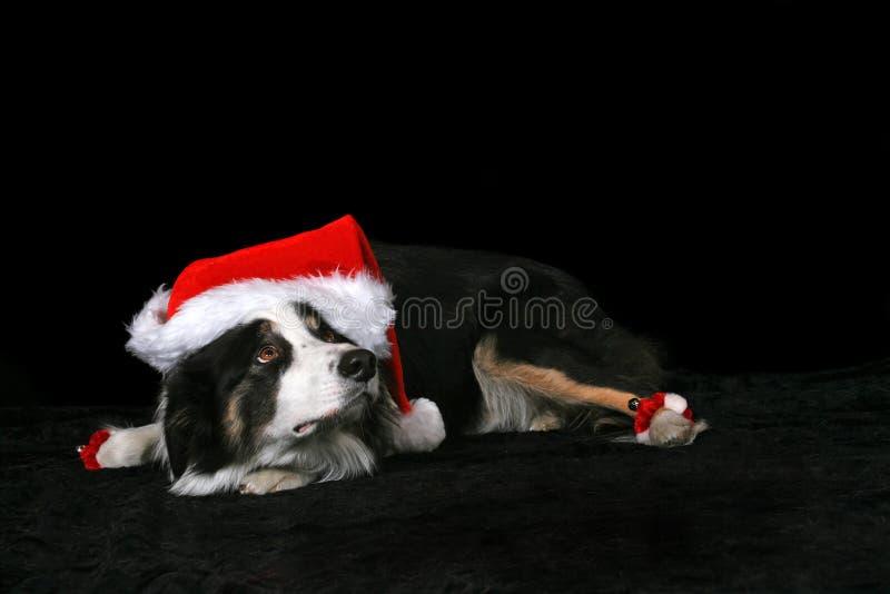 Cão do Natal foto de stock royalty free