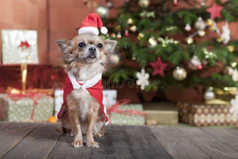 Cão do Natal antes da árvore de Natal imagem de stock royalty free