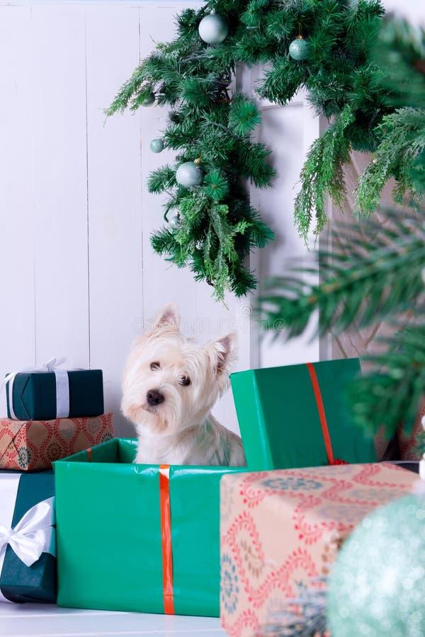 Cão do Natal como o símbolo do ano novo foto de stock