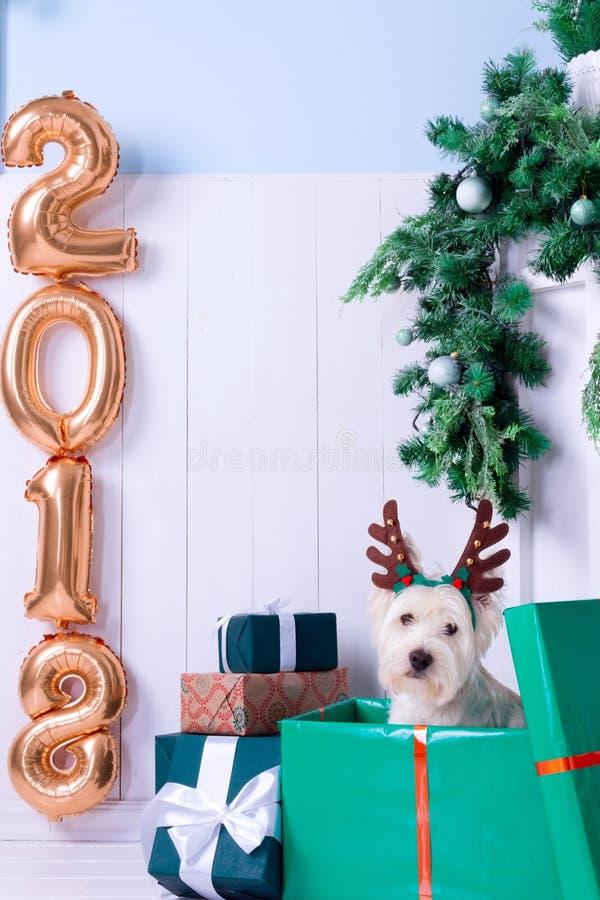 Cão do Natal como o símbolo do ano novo foto de stock royalty free