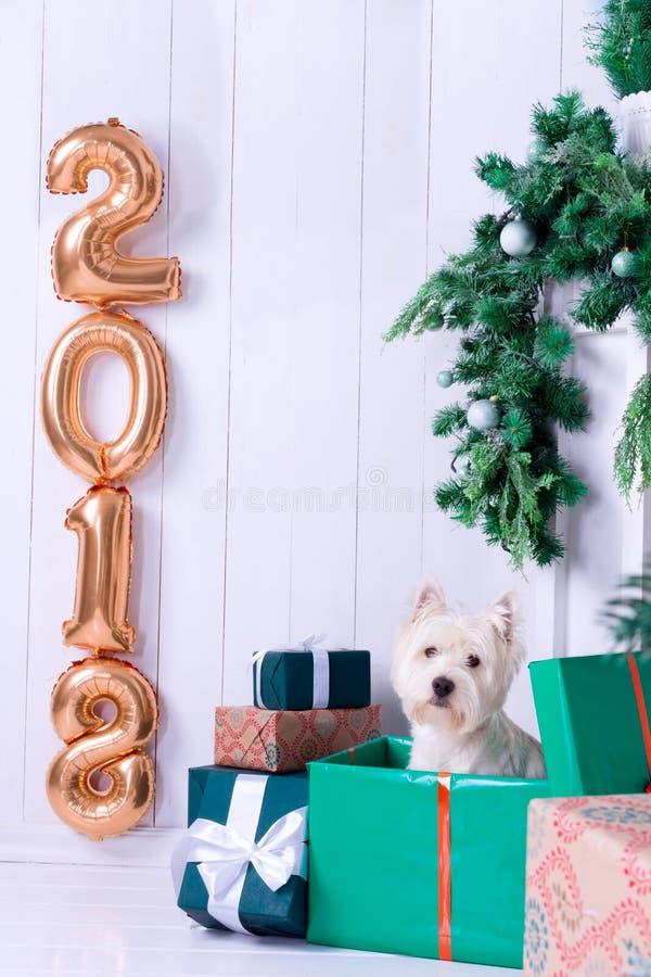Cão do Natal como o símbolo do ano novo imagens de stock royalty free