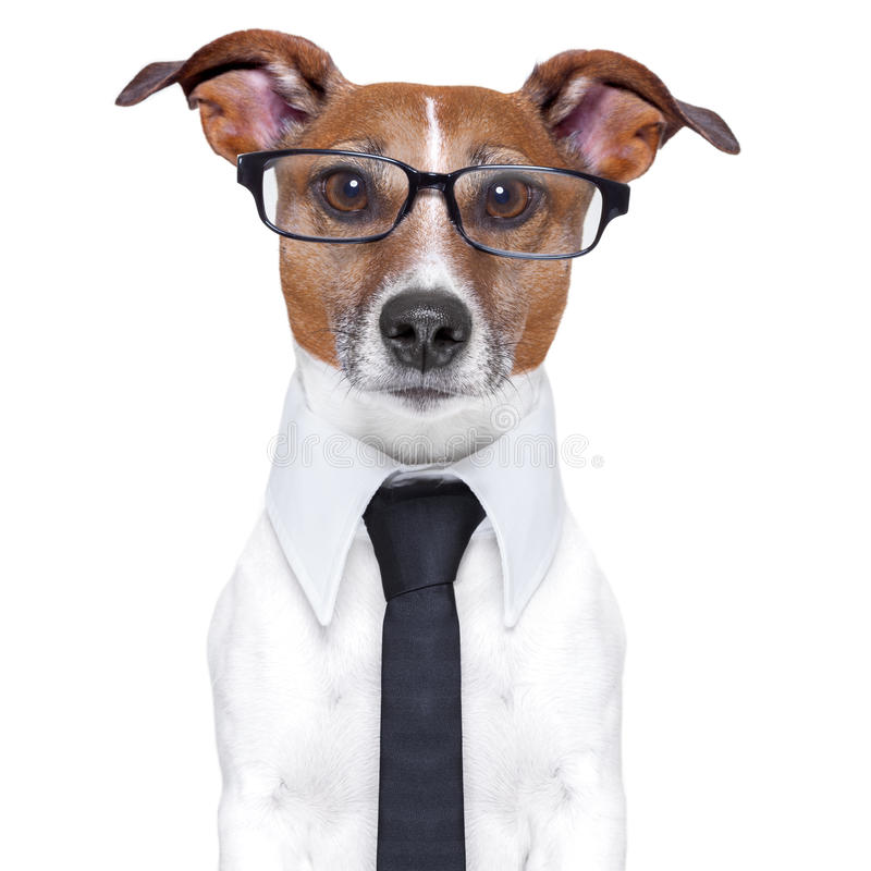 Cão do negócio fotos de stock