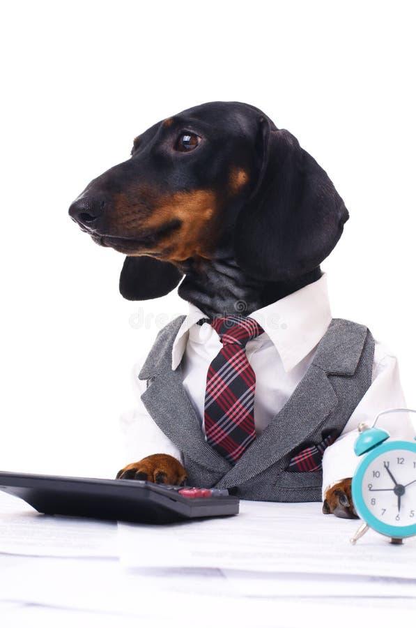 Cão do negócio foto de stock royalty free