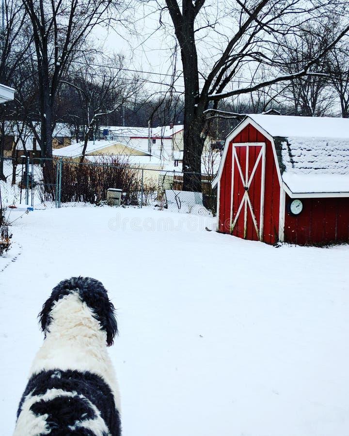 Cão do país das maravilhas do inverno imagens de stock royalty free