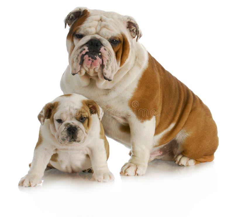 Cão do pai e do filho foto de stock