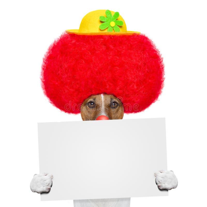 Cão do palhaço com peruca e o chapéu vermelhos fotos de stock