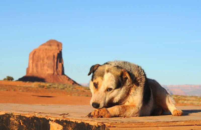 Cão Do Parque Foto de Stock Royalty Free