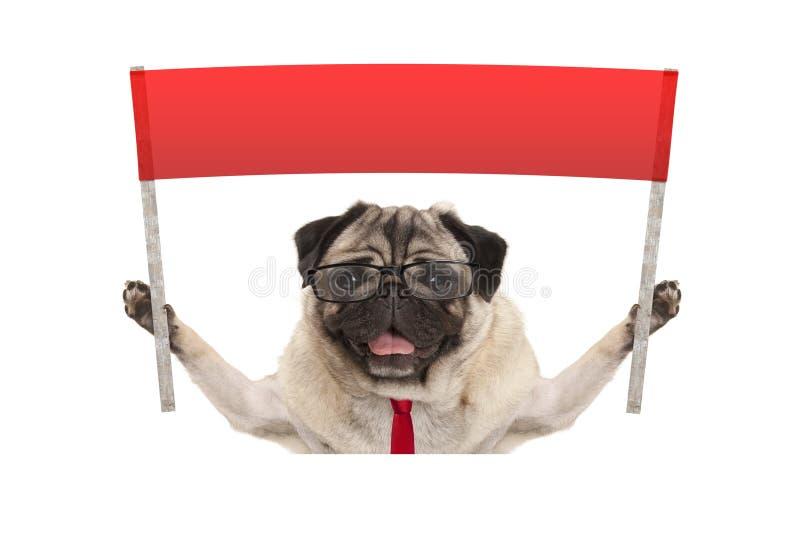 Cão do pug do negócio com os vidros do laço e de leitura, sustentando o sinal vermelho da bandeira imagem de stock