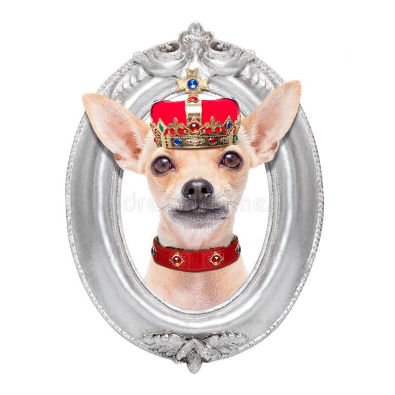 Cão do rei da coroa fotos de stock