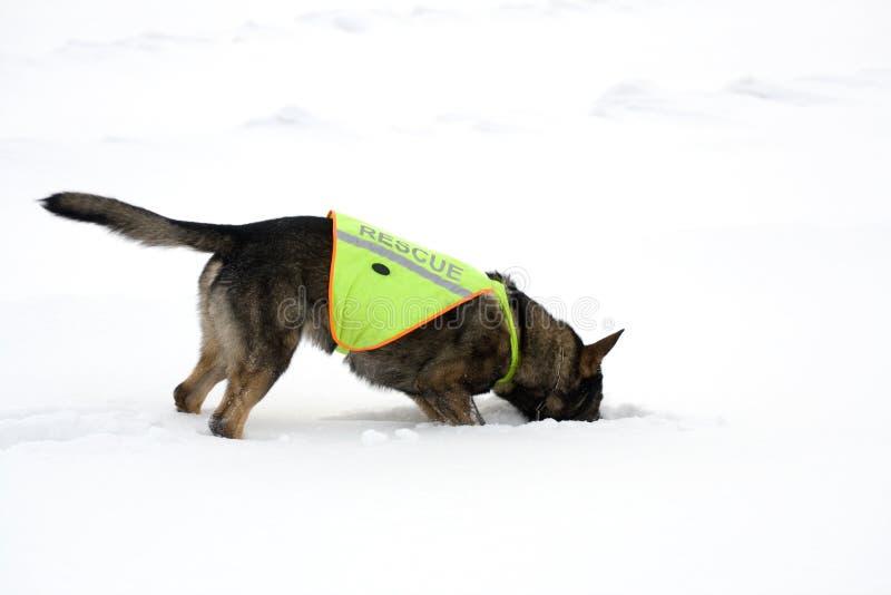 Cão do salvamento imagens de stock
