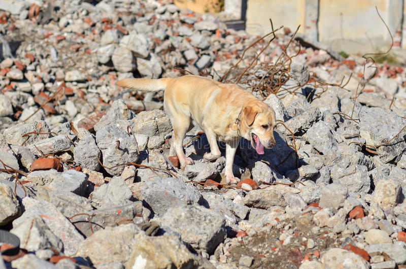 Cão do salvamento fotos de stock