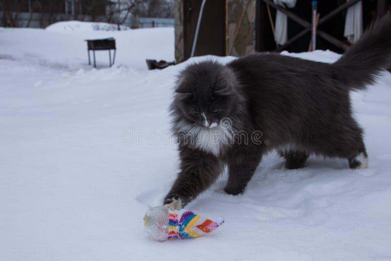 Cão do setter inglês que joga com o gato na neve foto de stock royalty free