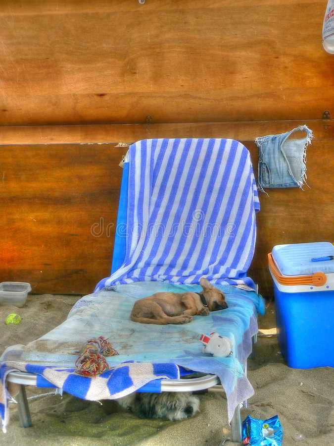 Cão do sono imagens de stock royalty free