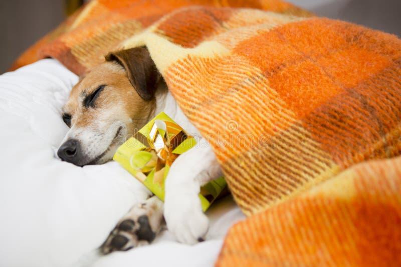 Cão do sono com o presente atual da caixa imagens de stock royalty free