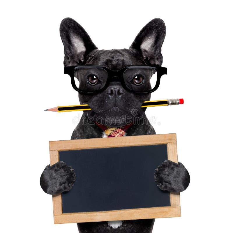 Cão do trabalhador de escritório fotografia de stock
