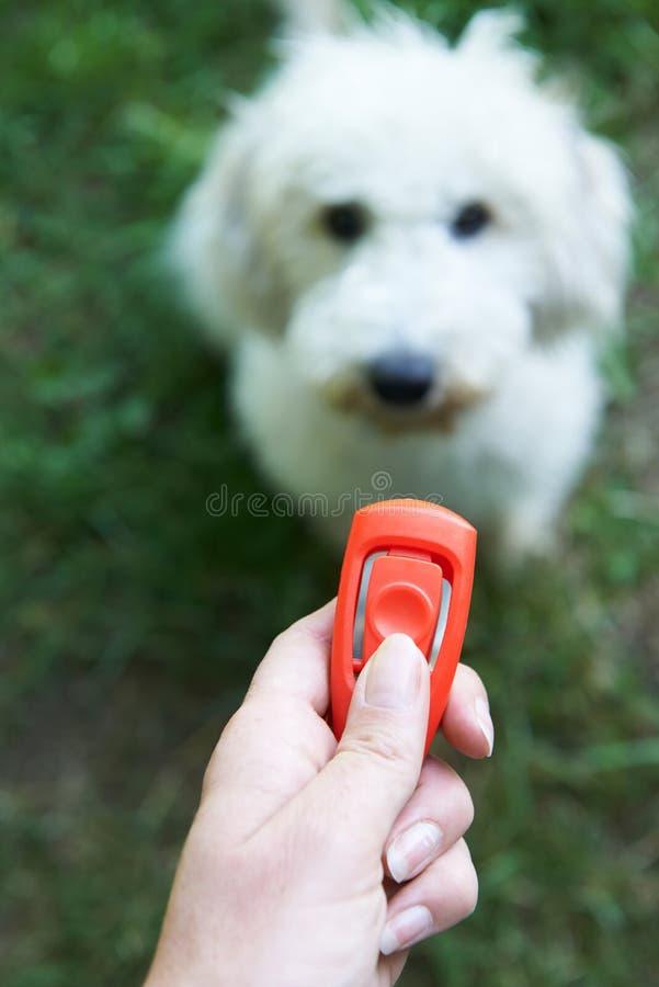 Cão do treinamento do proprietário do animal de estimação usando o Clicker foto de stock