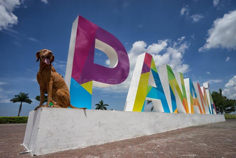 Cão do turista na Cidade do Panamá foto de stock