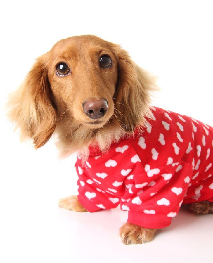 Cão do Valentim foto de stock