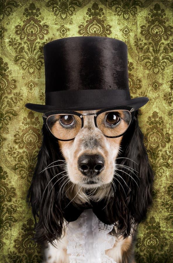 Cão do vintage fotografia de stock