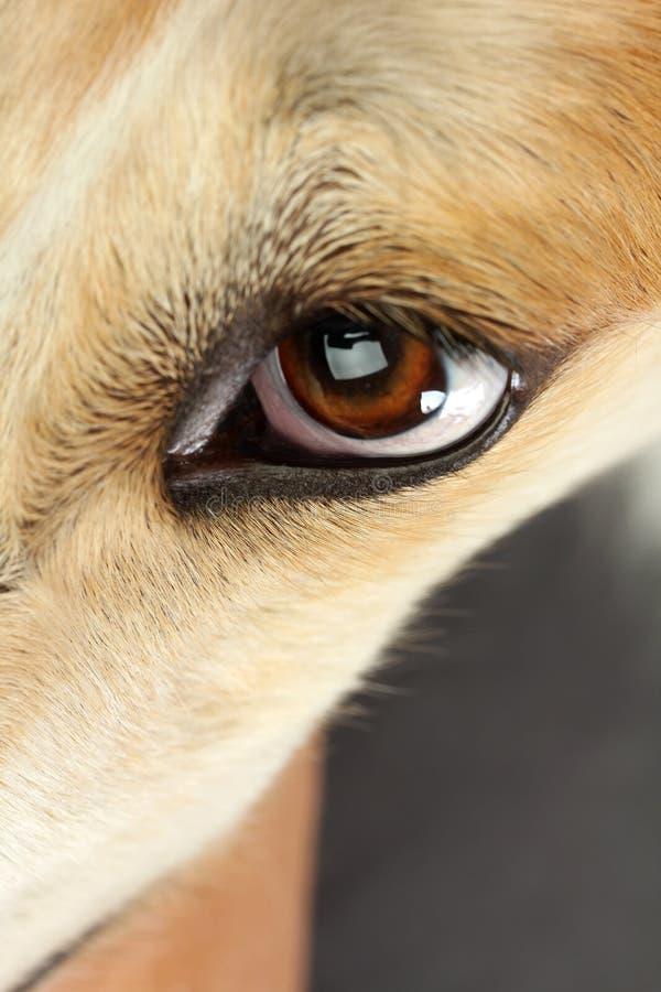 Cão do wolfhound do russo fotos de stock