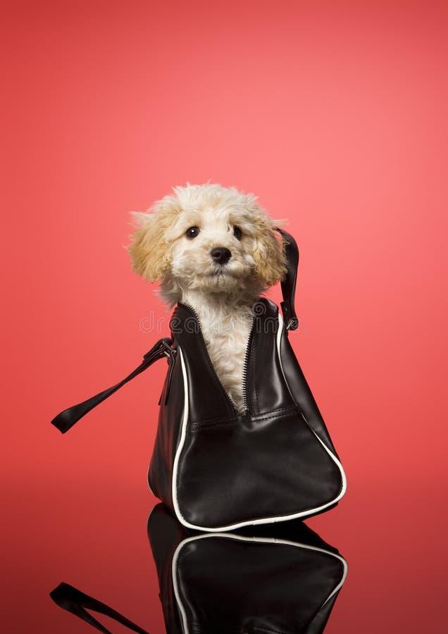 Cão doce imagem de stock