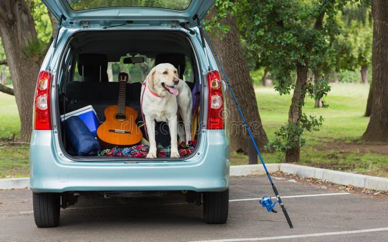Cão doméstico no tronco de carro fotografia de stock royalty free