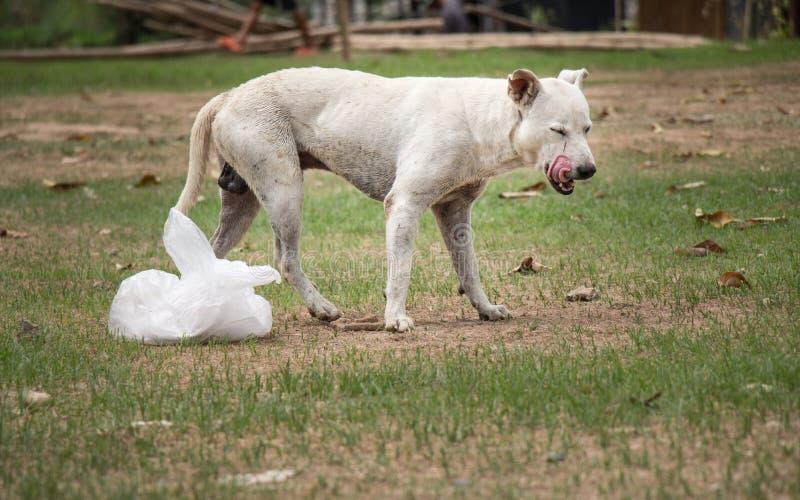 Cão e alimento fotos de stock royalty free