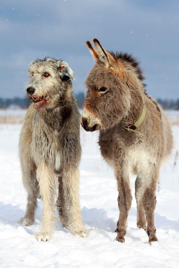 Cão e asno imagem de stock royalty free