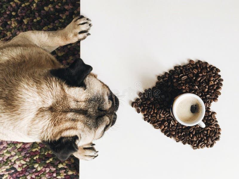 Cão e café do Pug imagens de stock