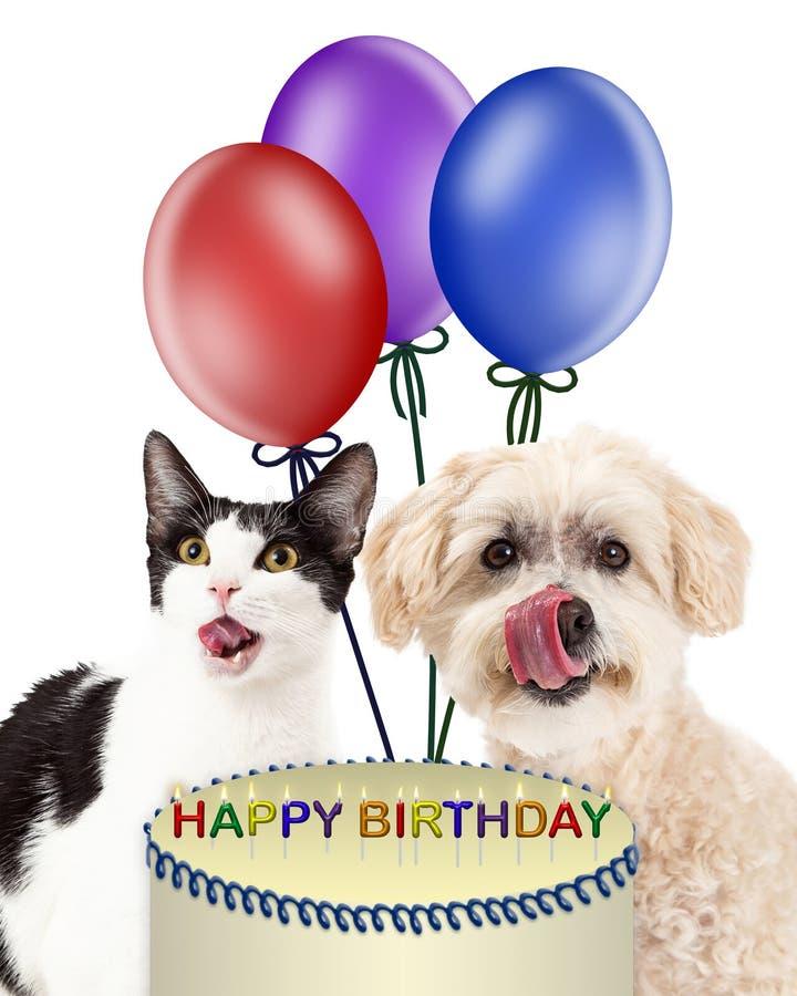 Cão e Cat Eating Birthday Cake fotografia de stock royalty free