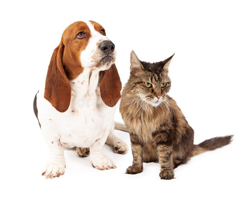 Cão e Cat Scowling irritados fotos de stock royalty free