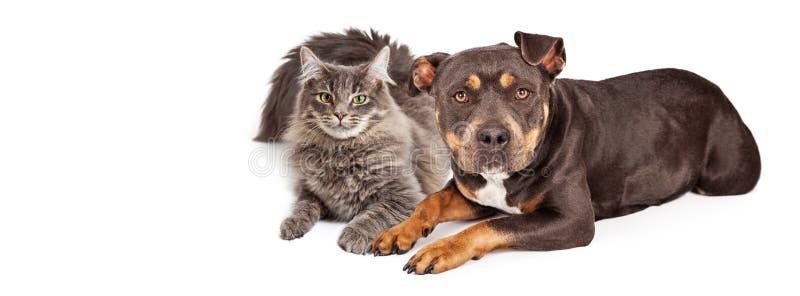 Cão e Cat Social Media Header fotografia de stock royalty free