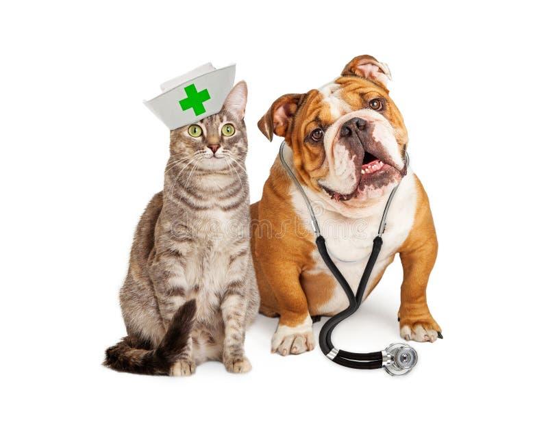 Cão e Cat Veterinarian e enfermeira fotografia de stock royalty free