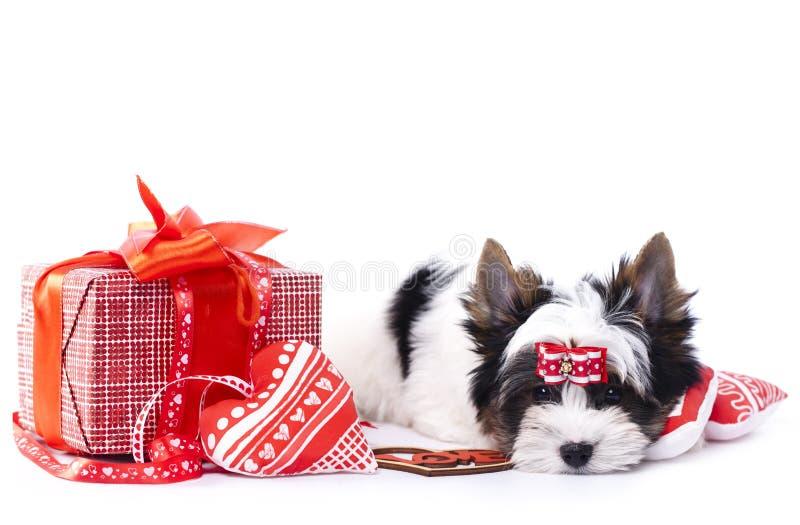 Cão e corações foto de stock