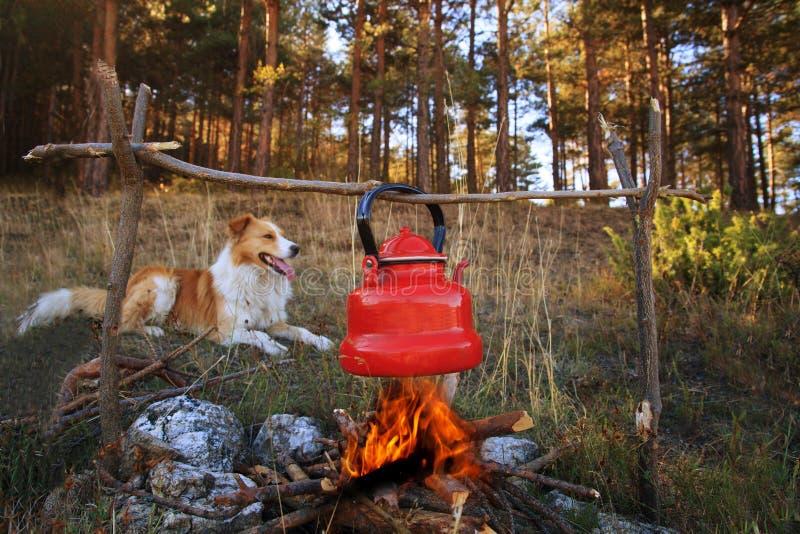 Cão e fogueira fotos de stock royalty free