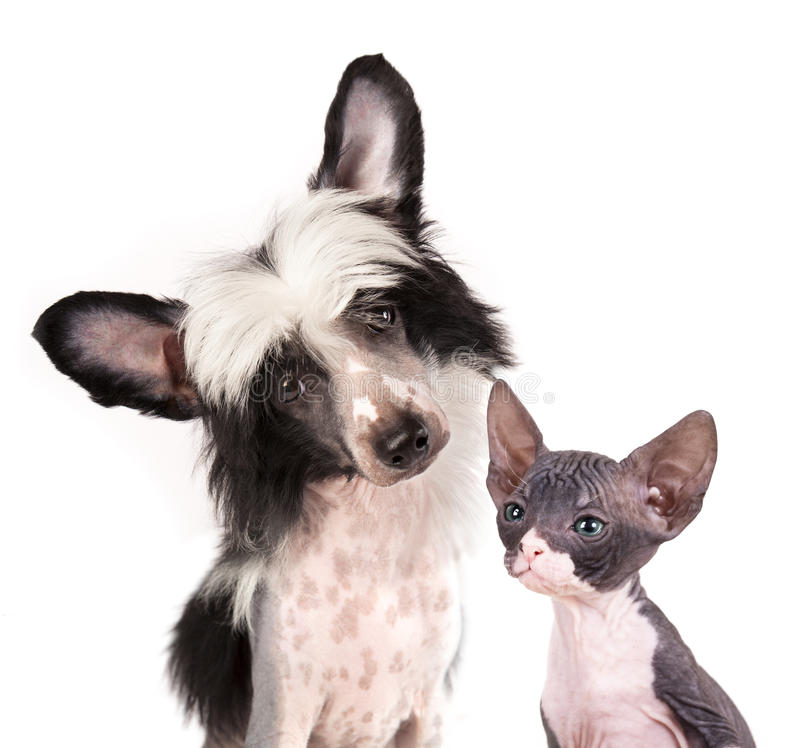 Cão e gatinho imagens de stock