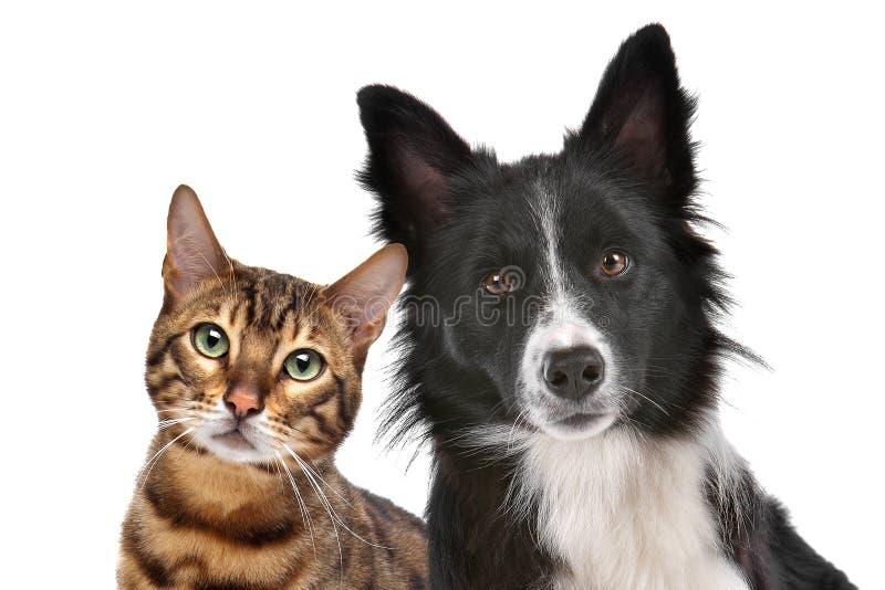Cão e gato imagem de stock