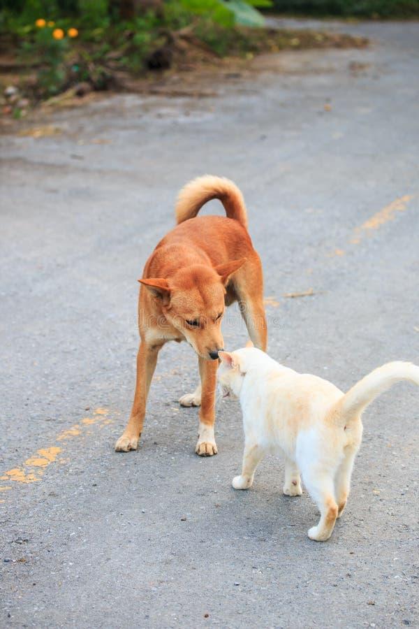 Cão e gato foto de stock royalty free