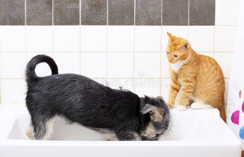 Cão e gato dos animais em casa que joga junto no banheiro fotos de stock royalty free
