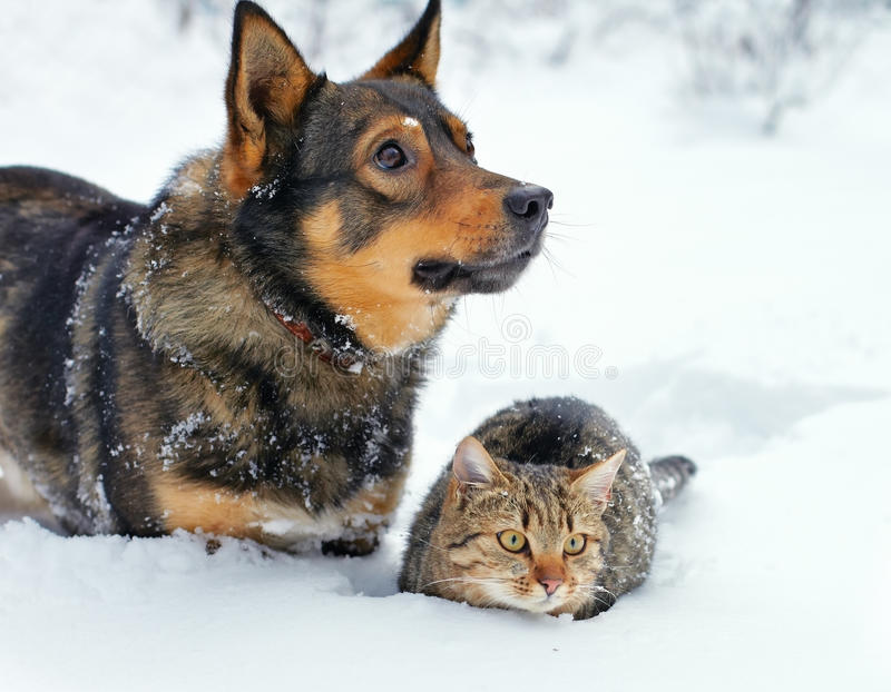 Cão e gato na neve fotos de stock royalty free